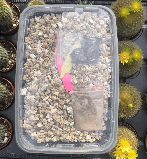 Cactus & Succulent Germination Seed Kit