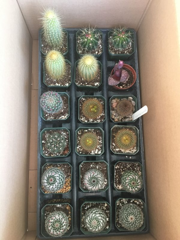 Medium / Large Cactus Mixed Variety Pack