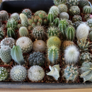 Cactus Seed Mixed Variety Pack