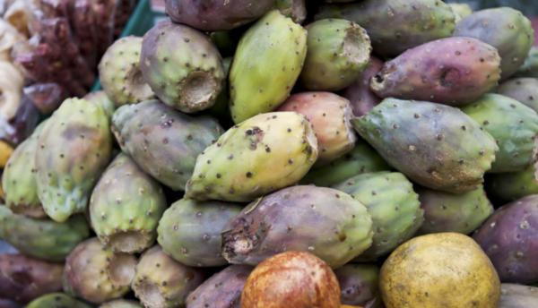 Opuntia Ficus-Indica - Prickly Pear Cactus