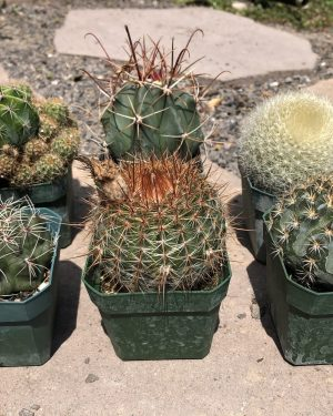 Cactus Mix