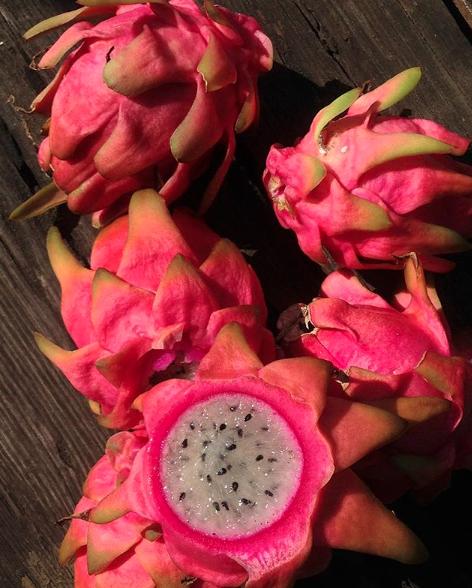 Hylocereus Undatus Cactus Seeds | Dragon Fruit Cactus Seed